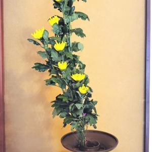 菊のお生花と桃源郷