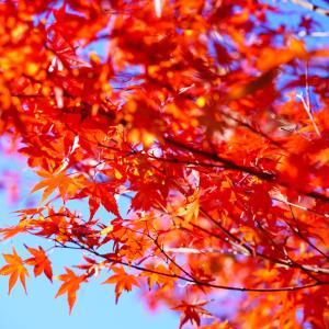 秋のお出かけ♪素敵なマルシェで美味しいもの三昧!
