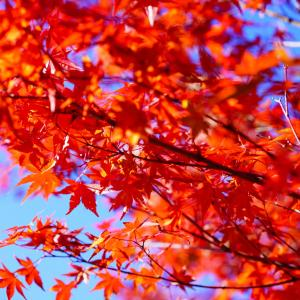 今が見頃♪東海エリアで人気の紅葉狩りスポットへ。