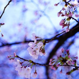 春野菜を楽しむ!お花見気分でおうちごはん&今日のポチ!