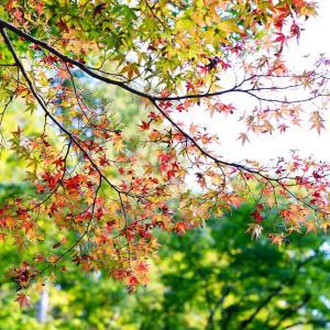 密を避けて・・。ちょっと早めに癒しの紅葉の名所へ。