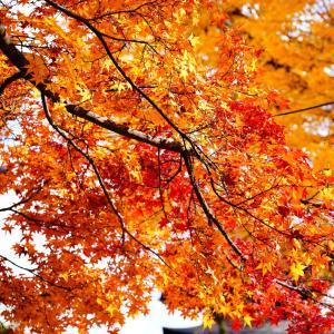 高山へ。密を避けて・・紅葉を楽しむ旅。