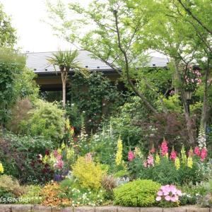 深谷オープンガーデンNo.110 【バラ&カラーリーフの庭】Sさんのお庭