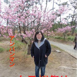 白子町桜祭り・早くも桜が満開です・九十九里浜の町