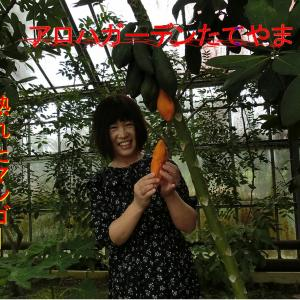 「アロハガーデンたてやま」で遊ぶ・橙色子さんの熟れたマンゴー