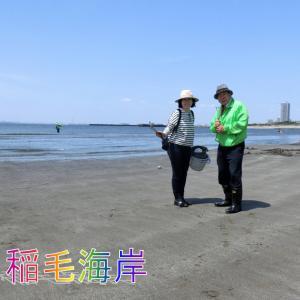 稲毛海岸潮干狩り・マテ貝がたくさん採れる・取り方を知りました