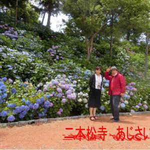 茨城県潮来市の二本松寺のあじさい・壮大な栽培