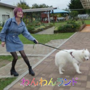つくばわんわんランドでワンちゃんと遊ぶ・ピン子さんは動物大好き・みんな大好き!