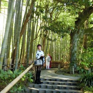 鎌倉の報国寺・竹の寺・ピン子さんは竹の中