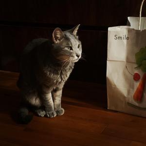 タナベという猫