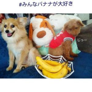 みんなバナナが大好き🍌