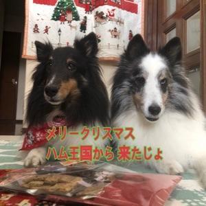 我が家にもクリスマスがやってきた?!