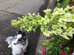 紫陽花の季節💦 蒸し暑くなって来た💦