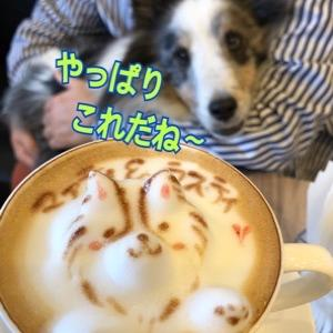 しろ犬カフェへ 3D カフェラテ❤