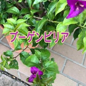 我が家の庭事情 花や葉達 ❤