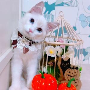 オーナー様募集開始の子猫さんのご案内♡