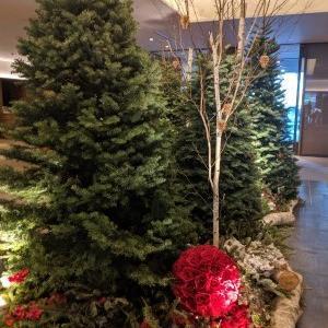 【婚活】クリスマスツリーを見ると焦る、焦る