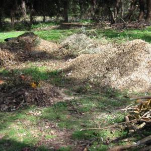 切り倒した木はどうなった