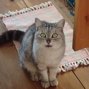 ご飯待ち猫