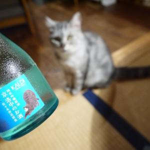 猫の酒で猫と酒