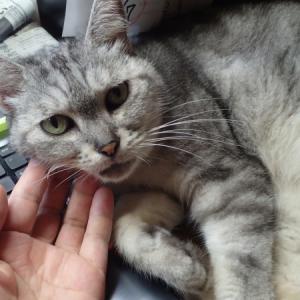 甘え猫と病院で拾った日本語