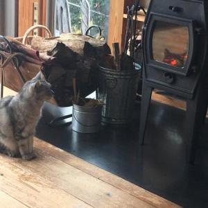 猫に、負けた.....。