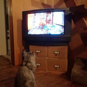 カラフル菜っ葉と糠漬けと学習する猫