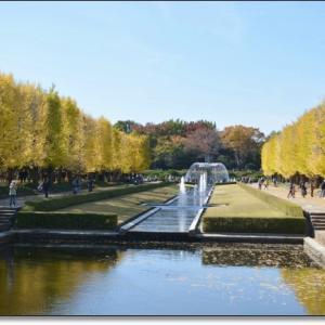 黄葉の昭和記念公園。