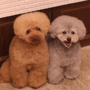 ☆ Pet hotel Friends ☆