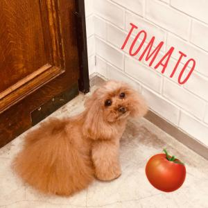 ☆ TOMATO's Trimming ☆
