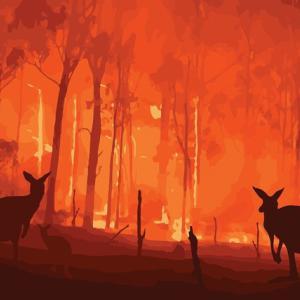 オーストラリア森林火災  寄付方法