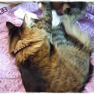 休みの日は甘えん坊MAX☆ママは股関節痛(笑)