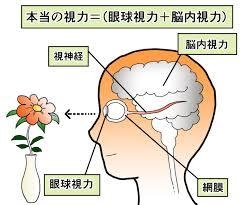 脳の見る力、脳内視力ってどんな視力なの?