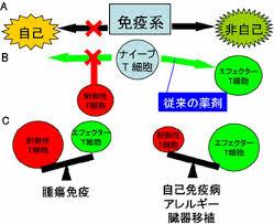 コロナの免疫攻撃から、制御性T細胞とは免疫反応を弱めるということなのですが・・。