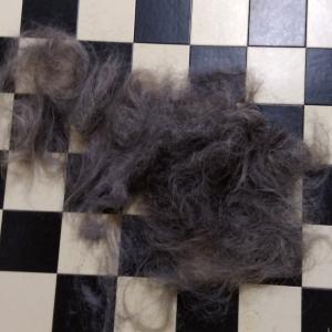 コロナウイルス騒動の中、30ヶ月後の髪の毛の行方は・・・。