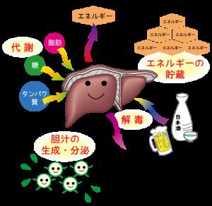 肝臓不調のサインはいろいろなところに出てきます。できれば改善を?