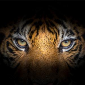 1/24(金)四柱推命で検証!『マネーの虎』ー上昇と転落の法則ー(全6回)