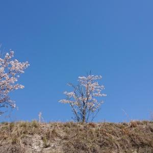 いいお天気だ。