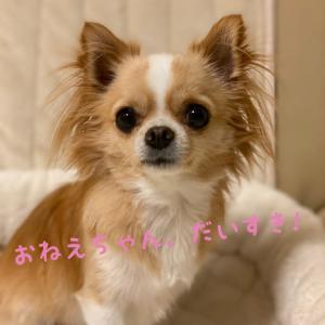 アニマルコミュニケーション 愛犬の行為、愛犬の気持ちは!?