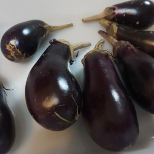 菜園に秋気漂い茄子実る