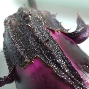 雨降りし朝の実りは夏野菜