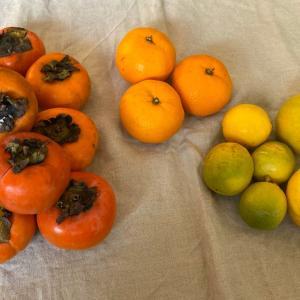 頂き物の果物と野菜