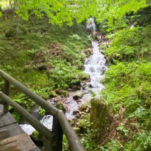 付知峡で過酷な森林浴