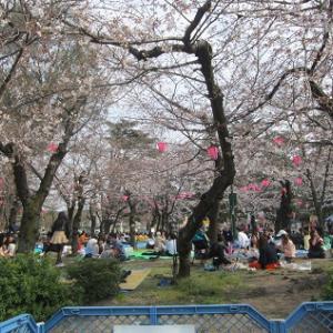 鶴舞公園の桜(史跡散策)