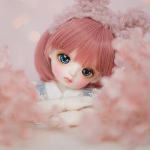 Lina ChouChou   Cherry Blossom Miyo  発売!