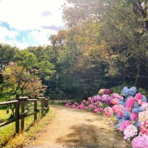 あじさいの植栽イベント ~すべての人が幸せになれるあじさい園づくり~