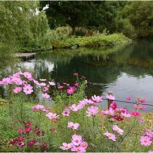 川島環境楽園の秋の花々  令和元年10月