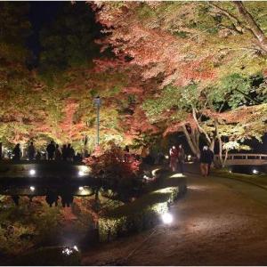 岐阜県土岐市・曽木公園「さかさ紅葉」のライトアップ   令和元年11月