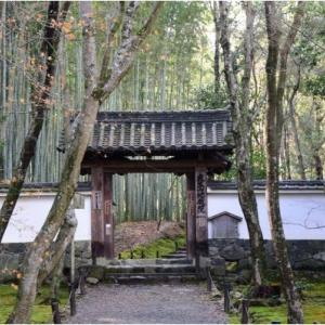 洛西の地蔵院 高雄の神護寺  令和2年1月