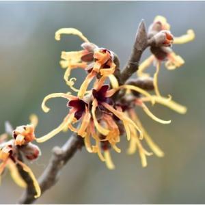 初春の野の花々  令和2年2月